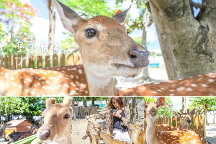 墾丁景點推薦 | 鹿境 – IG網美打卡 x 親子旅遊景點,恆春墾丁小奈良,餵梅花鹿好療癒