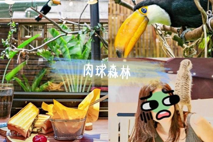 台北動物餐廳 | 肉球森林 – 跟貓咪.狐獴.大嘴鳥一起吃飯!東門站新開幕主題餐廳