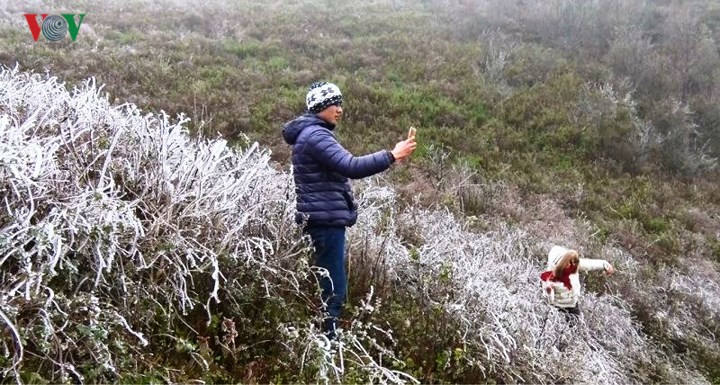Trees frozen over in Sapa, social news, vietnamnet bridge, english news, Vietnam news, news Vietnam, vietnamnet news, Vietnam net news, Vietnam latest news, vn news, Vietnam breaking news