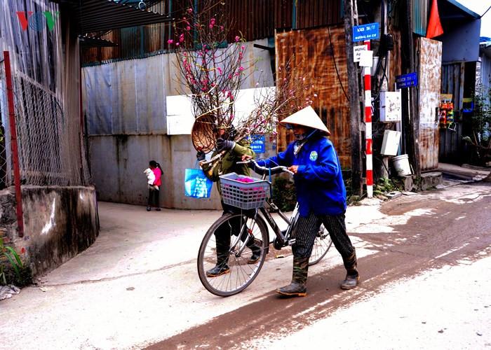 Kumquat trees and peach blossoms beautify Hanoi's winter, social news, vietnamnet bridge, english news, Vietnam news, news Vietnam, vietnamnet news, Vietnam net news, Vietnam latest news, vn news, Vietnam breaking news