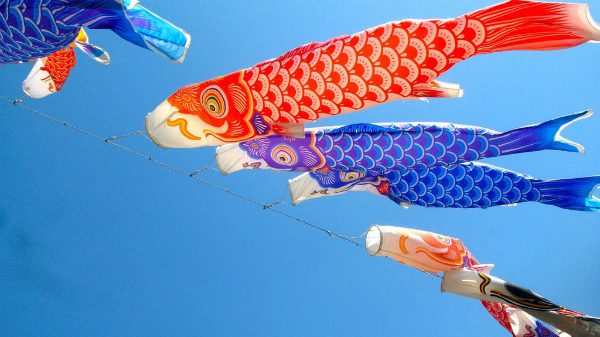 "Vietnam's first ""koi streamer field"" enchanting snappers, entertainment events, entertainment news, entertainment activities, what's on, Vietnam culture, Vietnam tradition, vn news, Vietnam beauty, news Vietnam, Vietnam news, Vietnam net news, vietnamnet"