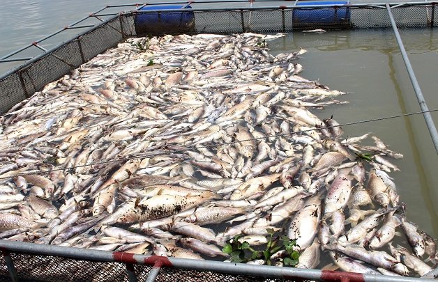 vietnam economy, business news, vn news, vietnamnet bridge, english news, Vietnam news, news Vietnam, vietnamnet news, vn news, Vietnam net news, Vietnam latest news, Vietnam breaking news, mass fish deaths, Hai Duong, river pollution