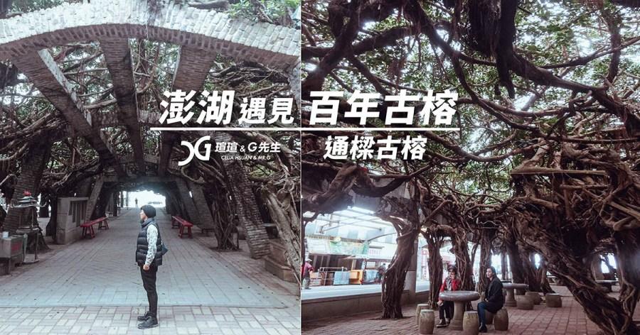 【澎湖景點】通樑古榕 最壯觀的老榕樹 300年的盤根錯節 澎湖旅遊推薦 冬遊夏游都適合 @瑄G玩宇宙