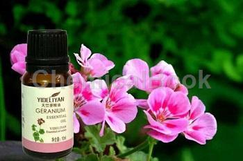 天竺葵精油的功效與使用方法