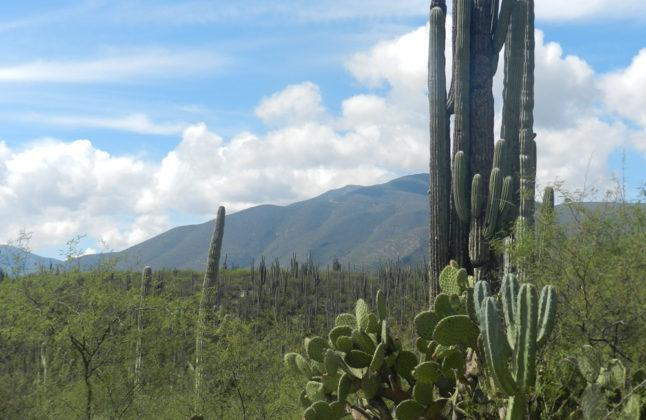 Tehuacán Cuicatlán is a World Heritage Site