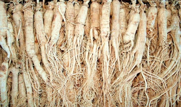 Image Result For How Much Does Ginseng Root Sell For