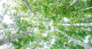 Puretime 原住民受傷秘方 從白樺樹獲得再生力量 北海道白樺樹液保養品 純天然無防腐劑添加