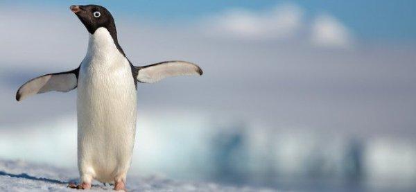 Penguins DisneyNature documentary