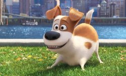 The Secret Life Of Pets 2 Has Dropped Louis C.Okay.