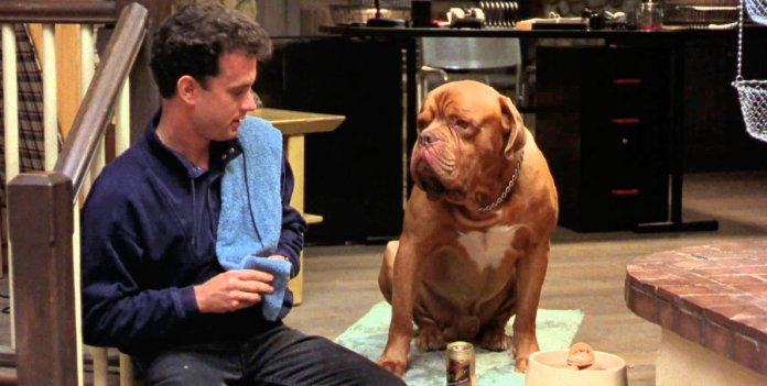 Turner And Hooch: Premiere Date, Cast And Other Quick Things We Know About  The Disney+ Series - CINEMABLEND