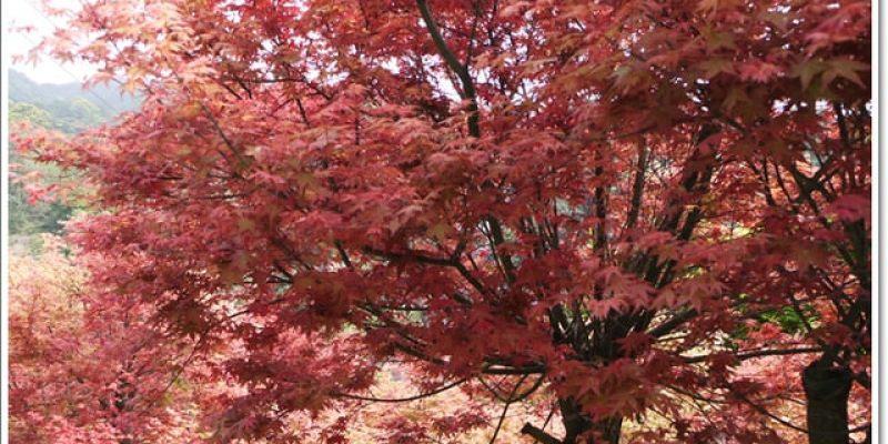 春天˙楓葉紅了~【台北奧萬大】賞楓好地方