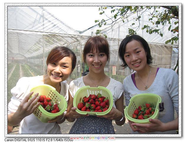 病房同樂會 ~<苺圃>採草莓趣