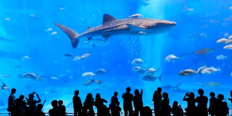 ▌沖繩美麗海水族館▌沖繩必訪景點♥海洋博公園美麗海水族館♥壯觀又療癒的黑潮之海(內有影片分享)