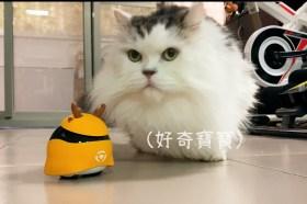 遠端操控好輕鬆 不怕愛寵沒人顧 Ebo寵物智能伴侶