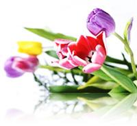 spring-variety-hdr1.jpg