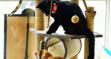 《台中美食》超萌中途貓餐廳朵喵喵咖啡館~正餐、下午茶通通有!還有萌萌中途貓咪陪吃~超療癒!