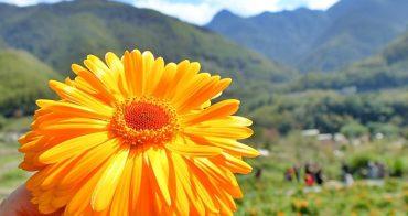 《新竹旅遊》直擊那羅部落無毒金盞花田,不只現採美麗花朵~還現做精油純露精華液,來一趟那羅讓人全身水噹噹