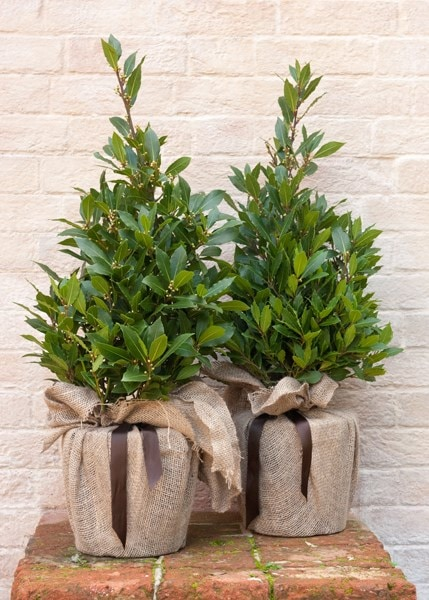 Tall Plant Pots Outdoor