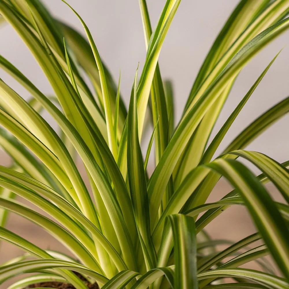 Water Plants Grow Indoors