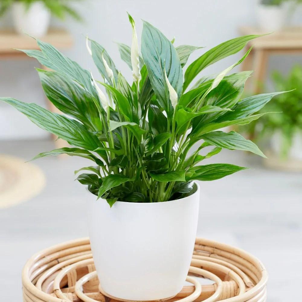 Tall White Plant Pot
