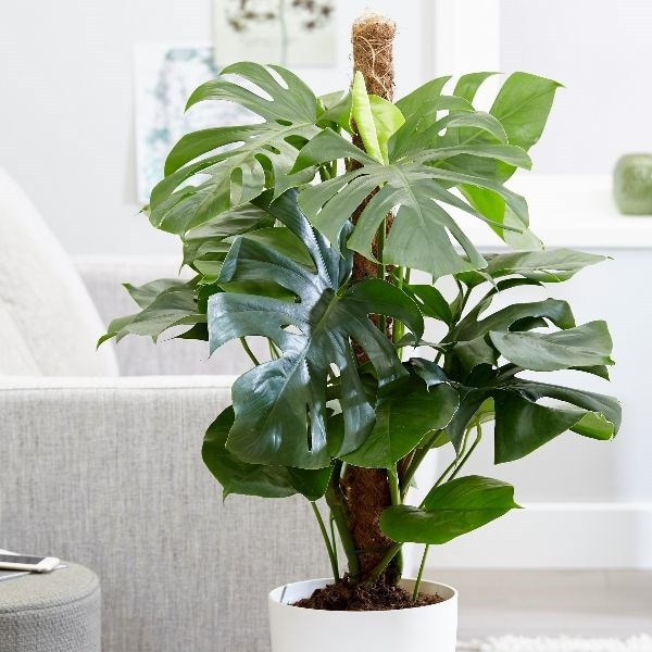 Easy Office Plants