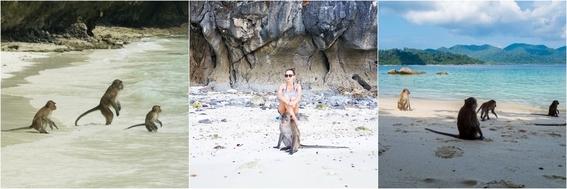 playas con animales 5