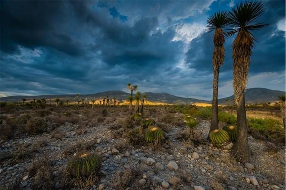 valle de tehuacancuicatlan el sitio mexicano que la unesco nombro patrimonio de la humanidad 1