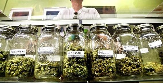 morena propuesta legalizacion produccion consumo de marihuana 2