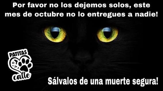 gatos negros sacrificios halloween 1