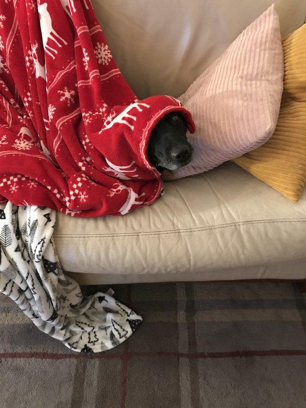 dog rests under reindeer blanket
