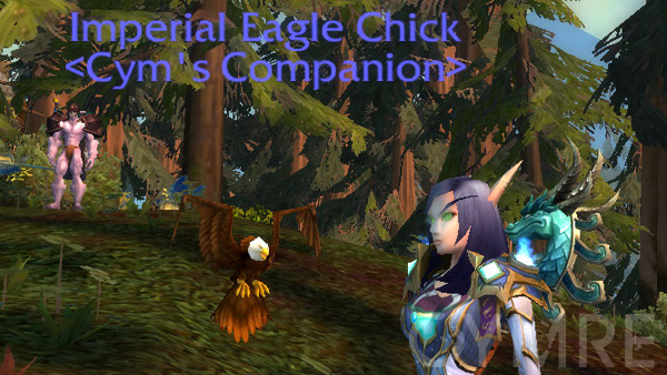 Imperial Eagle Chick