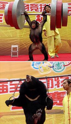 cruelty olympics, China, 29th September 2006