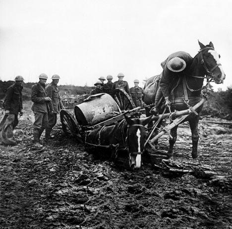 War horses`