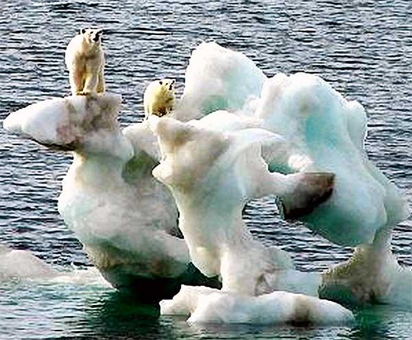 Polar Bears Stranded on Ice Floe