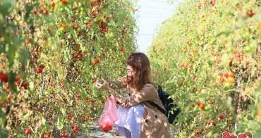 【台南景點】台南夢幻番茄園,現採現吃不用錢~最適合親子共遊的採果樂:夢幻團長鹽地番茄園