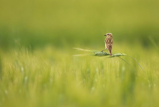 Amazing Wildlife Photographs From 2011 Golden Turtle