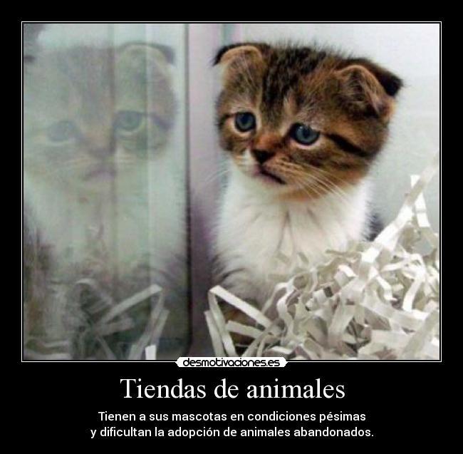 carteles animales tiendas animales desmotivaciones