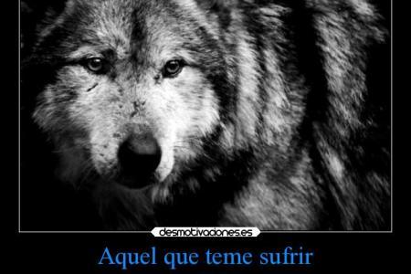 Resultado De Imagen Para Lobo Frases Lobos T