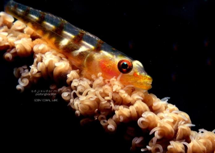 Scuba Diving In Indonesia Dive Advice Booking Directory