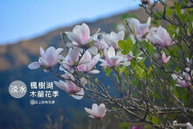淡水景點    來天元宮賞櫻千萬別錯過的秘境桃花源 楓樹湖木蓮花季 行程、交通方式與周邊景點