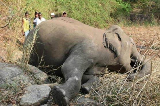 18 elephants suspected killed by India lightning strike - World - Dunya News