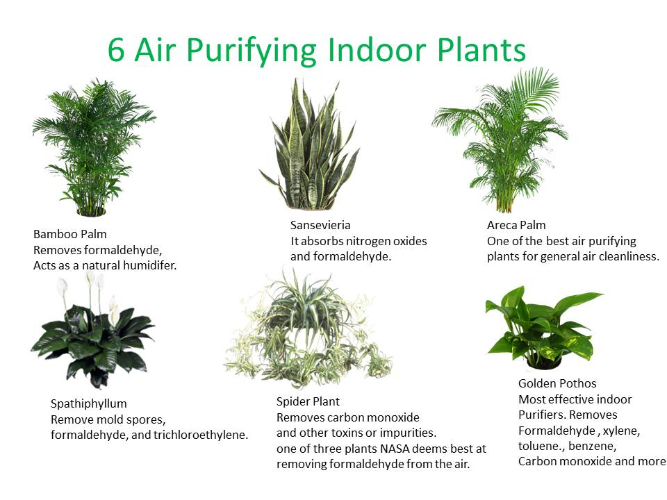 Indoor Plants Delhi