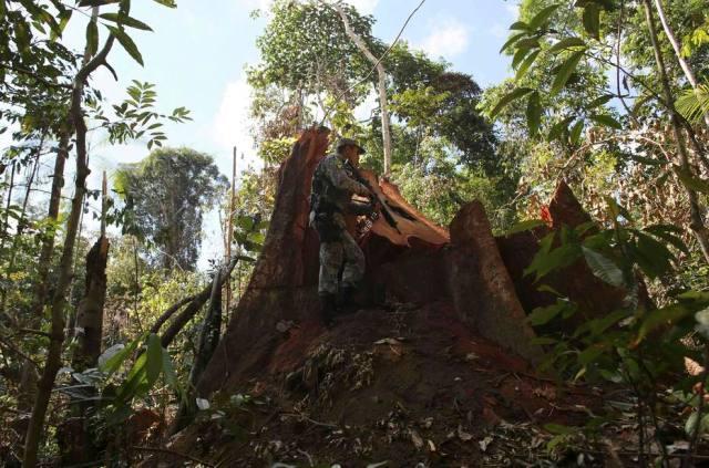 Governo Temer quer reduzir floresta na Amazônia para agradar ruralistas