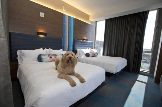 Alguns hotéis recebem os animais de estimação em alto estilo