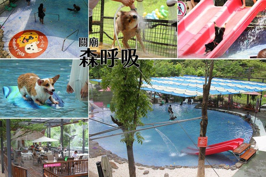 台南 夏天也要帶毛小孩一起清涼一夏,台南狗狗玩水的遊樂園,寵物放電率100趴的好所在 台南市關廟區|森呼吸寵物休閒廣場