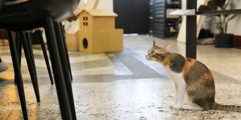 台南 巷弄裡古早理髮廳改建成的小餐館,店貓「公主」駐店,還會變身安全喵星人激萌超可愛 台南市中西區 三色貓-公主 桂蘭