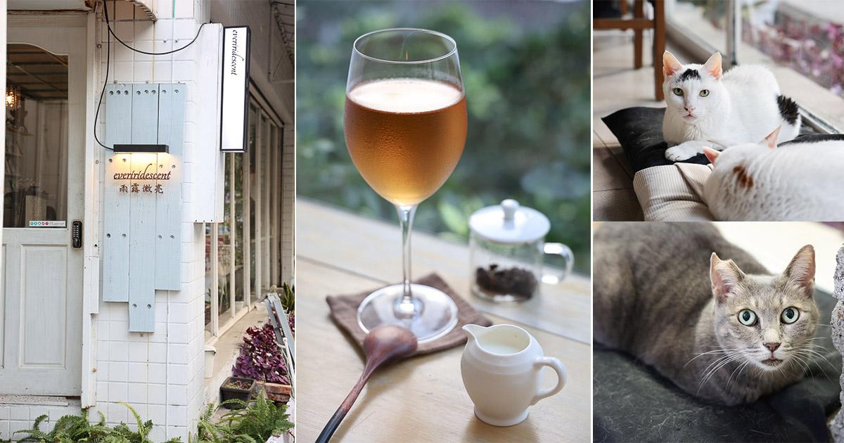 台南 悠閒品嘗各國茶莊好茶的一間茶屋,台南火車站附近下午茶或是摸貓的好去處 台南市北區 雨露微亮