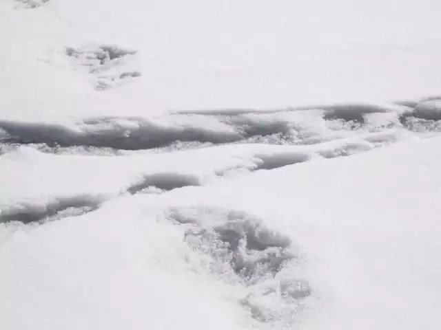 they cant be yati foot prints. could be a bears. says experts to india army claims of yati foot prints.