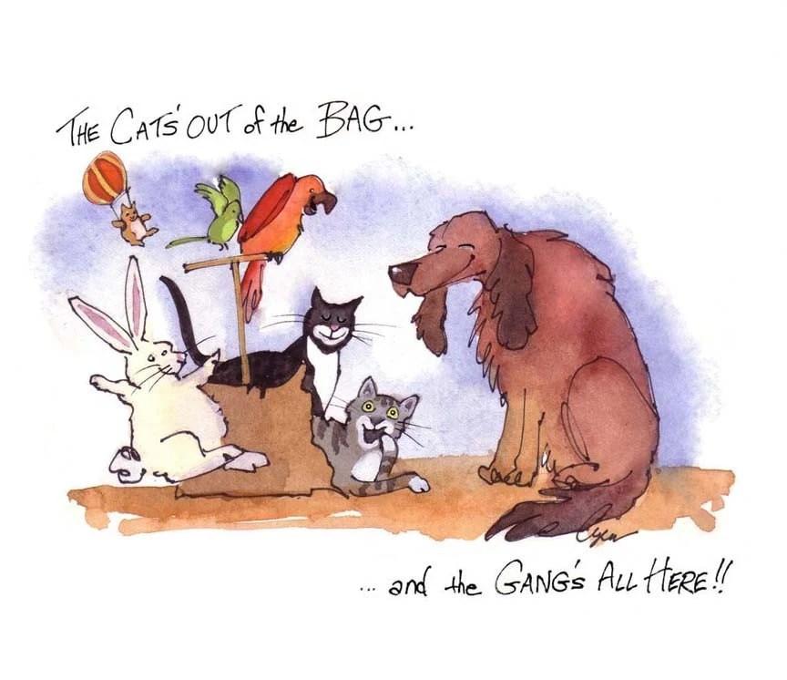 Funny Pets Card Animals Birthday Card Dog Cat Bunny Rabbit