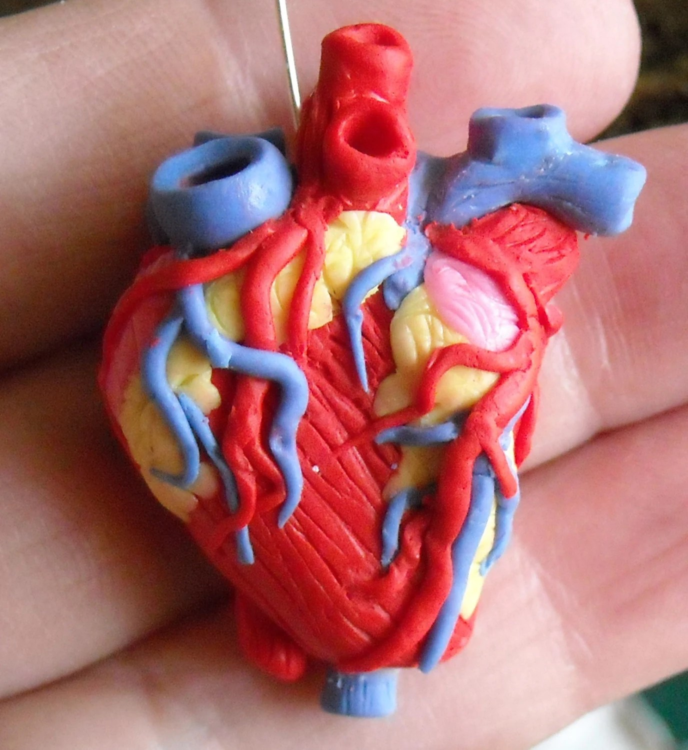 Ideas Of The Human Heart Anatomy Science Project